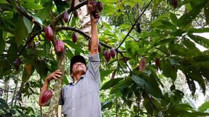 ¿Agricultura sostenible adaptada al clima o agricultura climáticamente inteligente? ¿Por qué no amba