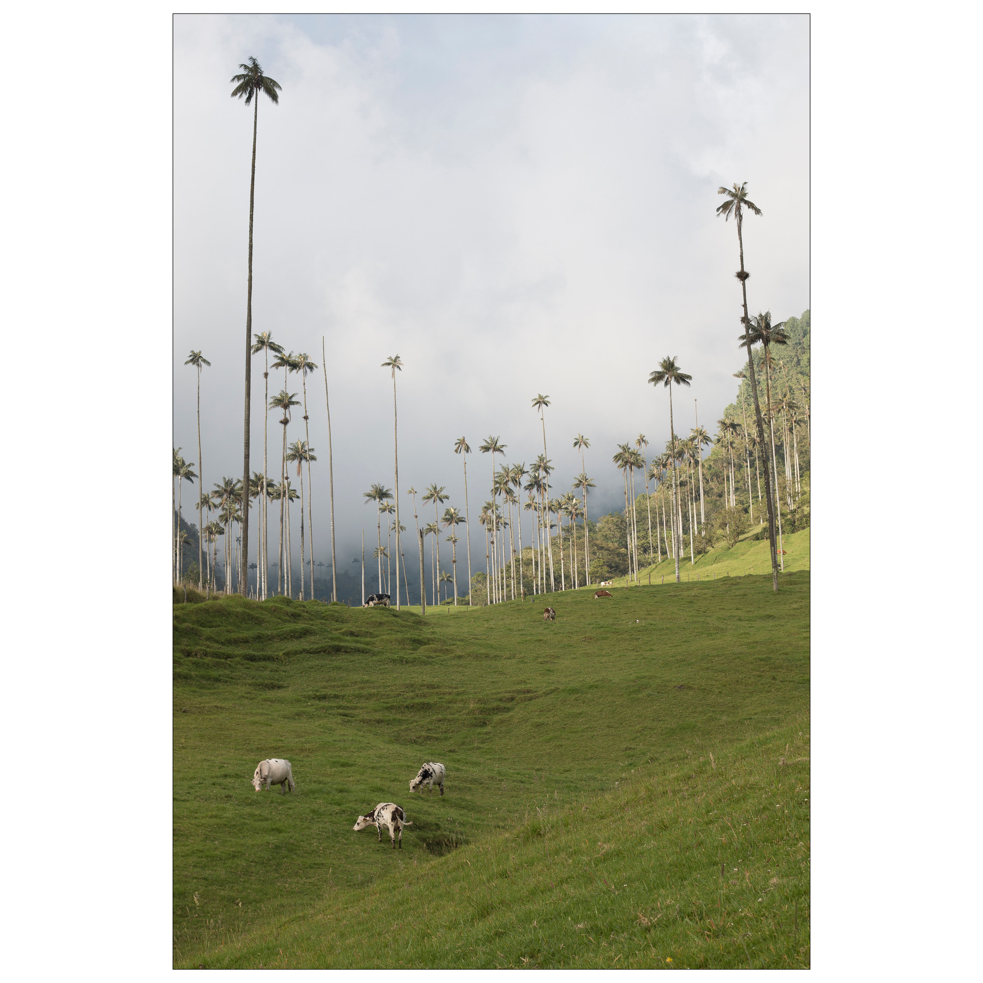 Landscape (8).jpg