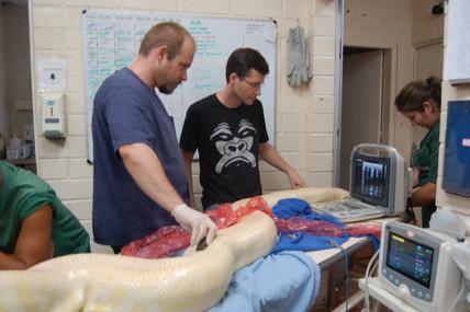 Serpentes passam por série de exames no Zoológico de Sorocaba. Veterinários realizaram exames por ul