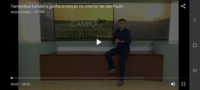 Tamanduá-bandeira ganha proteção no interior de São Paulo
