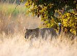 1775 - Luanga Forest - BioCarbon Partner