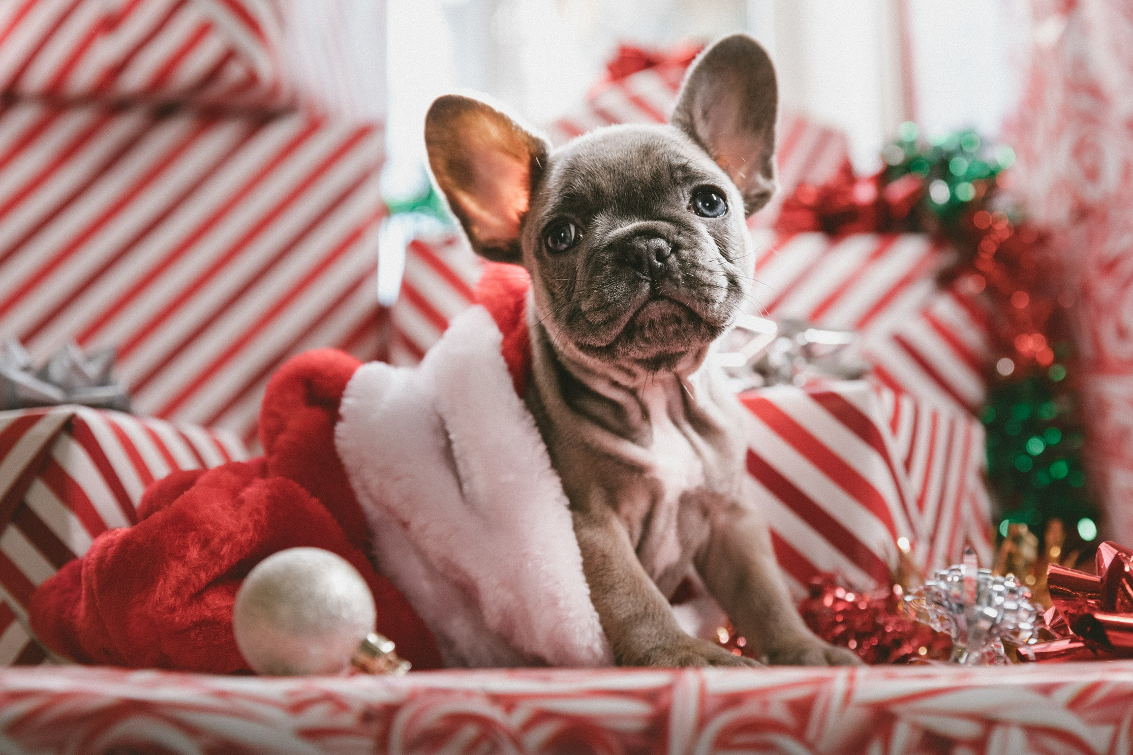 Cute puppy stocking stuffers