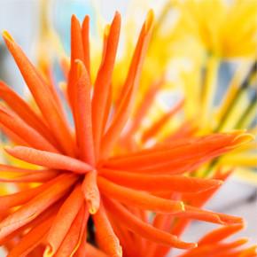 Eccentric Floral Arrangements