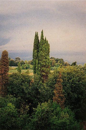 Tuscany TM, 2002 .jpg