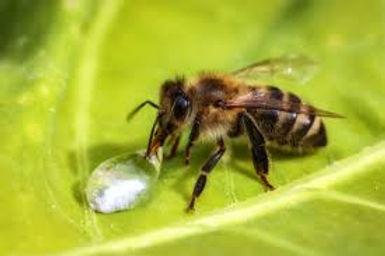 abeille 1.jpg 2.jpg