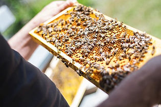 bees-2368228__340.jpg