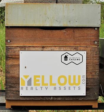 Ruche Yellow.jpg