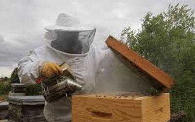 apiculteur 1.jpg