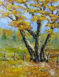 """""""Tree & Fence""""  $175.00"""