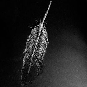 Drawn feather