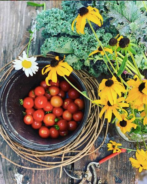 Garden Chat & Consultation