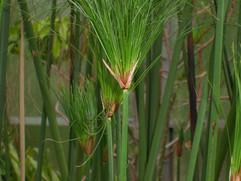 Botanics1.jpg