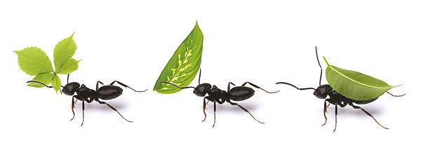 ANTS-LEFT.jpg