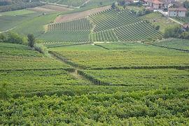 Tuscan Vineyards.jpg