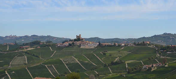 Vineyards%20with%20castel_edited.jpg