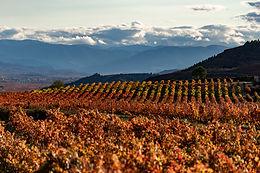 21st Century Rioja
