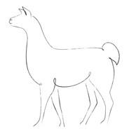 Llama Line Art