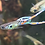 rare swordtail guppies for sale