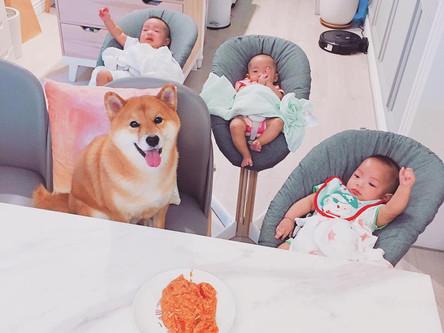照顧寶寶的最得力助手