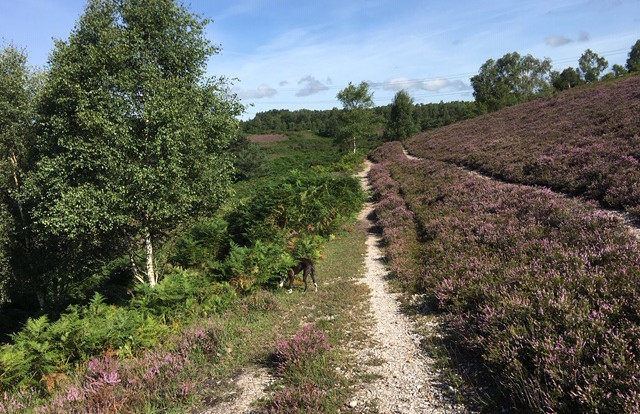 Access to the New Forest