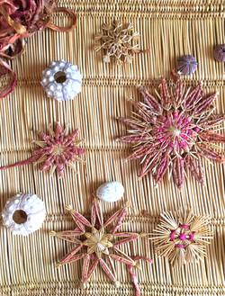 thepalmist_banner_sea corals