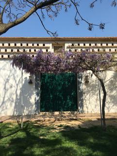 Montedoro in spring