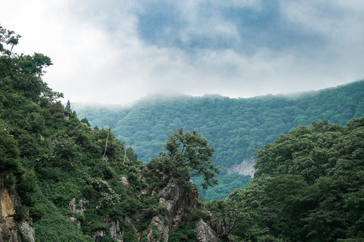 Jigokudani mist, Japan, 2019.