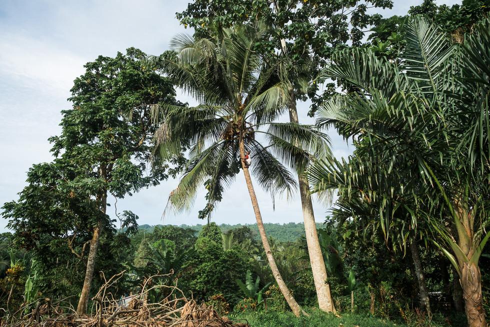Yu Wantem Coconut?, Hog Harbor, Vanuatu, 2019.