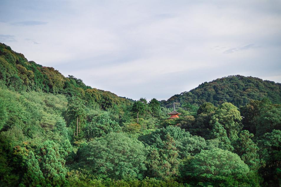 Koyasu Pagoda over the trees, Kyoto, Japan, 2018.