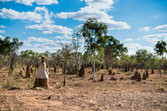 Termite mound with a t-shirt, Northern Territory, Australia, 2018.