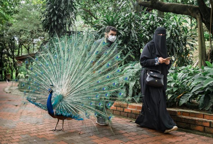 The peacock and the lady, Kuala Lumpur, Malaysia, 2020.