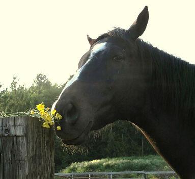 beddyflowers_edited_edited.jpg