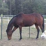 lady adopt 0618.jpg