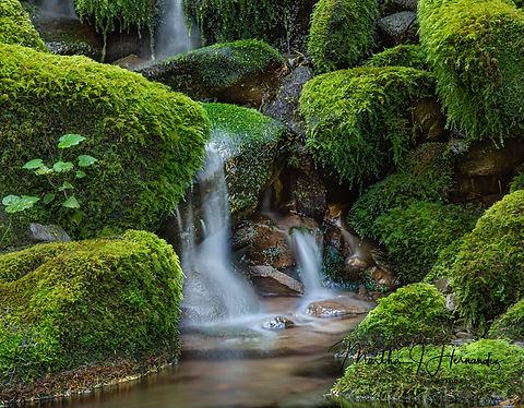 Sol duc Falls Trail.jpg