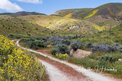 Carizzo Plain Road