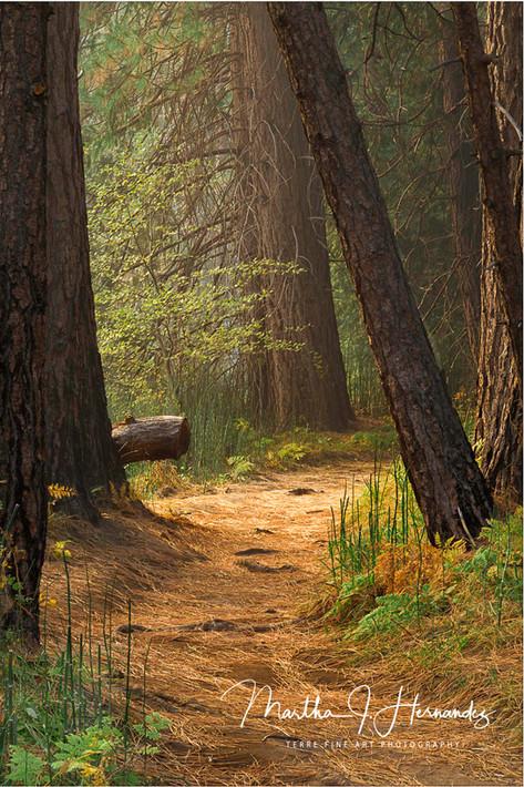 Hansel and Gretel Trail