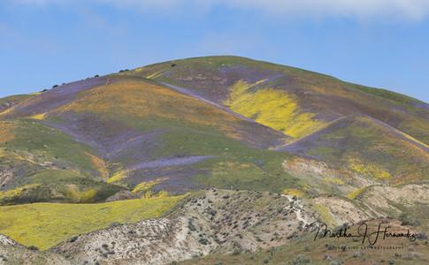 Carizzo Plain Super Bloom Multi