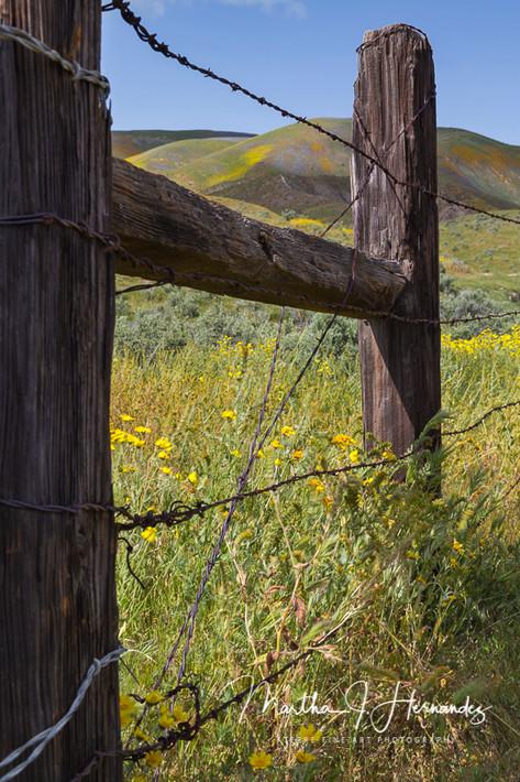 Carizzo Plain Fence
