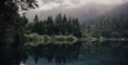 Forest_Master%20Image_edited.jpg