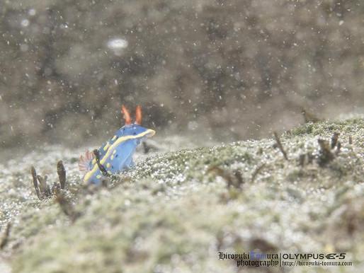 葉山で散る粉雪