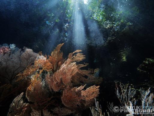 インドネシア・ラジャアンパットの海。