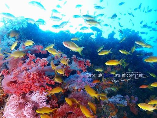 フィリピン・モアルボアル ペスカドール島