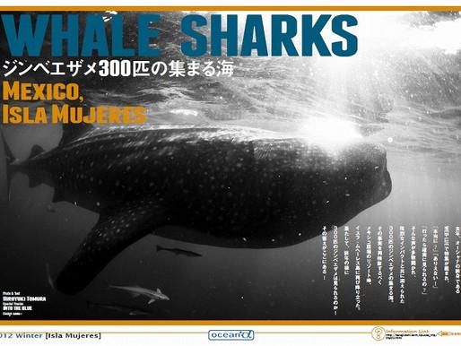 ジンベエザメ300匹の集まる海