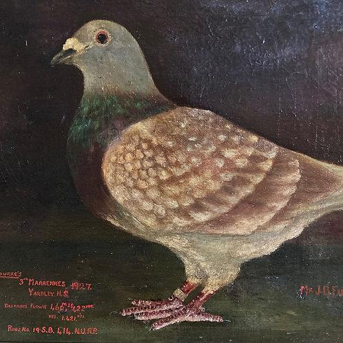 Prize race pigeon oil painting - 'Spearmint'