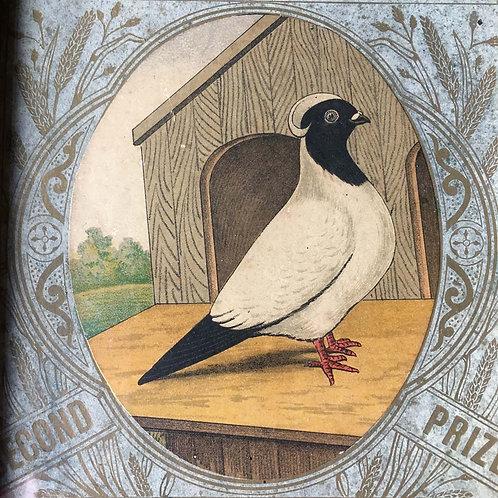 NOW SOLD - Edwardian prize pigeon award - Nun