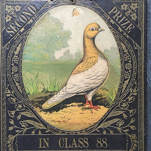 NOW SOLD - Victorian prize pigeon award - in Class '88
