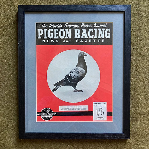 NOW SOLD - Vintage racing pigeon print - 'Lerwick Lady' No.11