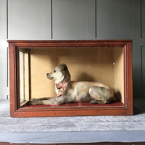 NOW SOLD - Victorian Taxidermy terrier dog