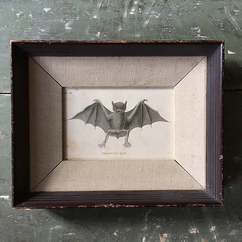 NOW SOLD - 19th century bat engraving