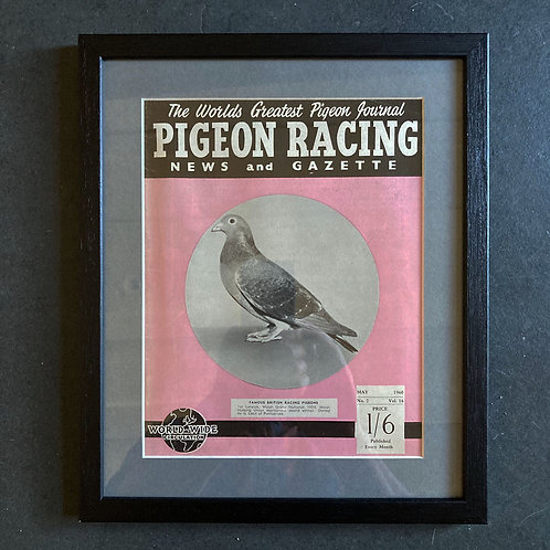 NOW SOLD - Vintage racing pigeon print - 'Cecil' No.2
